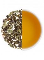 Teabox Mint Cooler Iced Tea 40 cups - 100g
